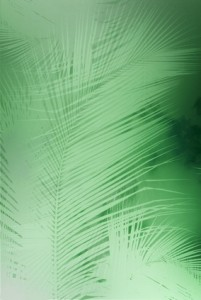 Monotone palm leaves