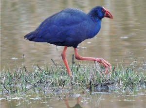bird-mallorca